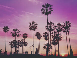 photo of palm trees against purple sunset